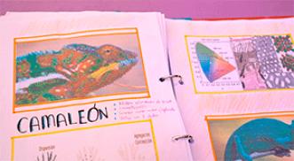 ¿Por qué cambia de color el camaleón?