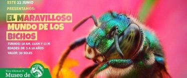 El maravilloso mundo de los bichos