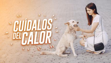 Sigue estos consejos para proteger a tu mascota del calor