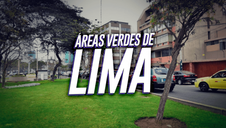 Albergue de árboles: ¿El mejor lugar para los árboles de Lima?