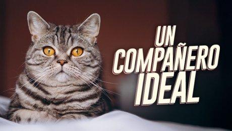 ¿Te gustan los gatos? Conoce cómo y dónde adoptar uno de forma responsable
