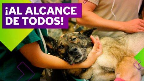 Conoce las veterinarias solidarias al sur de Lima