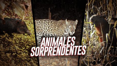 Estos son los animales que se esconden en nuestra Amazonía