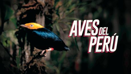 El arte de ver y reconocer aves silvestres