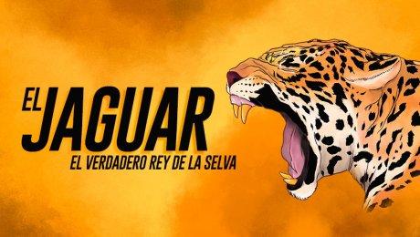 ¡Alerta roja! Los jaguares están en peligro