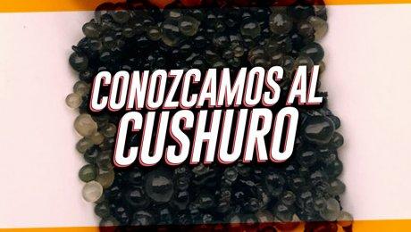 Cushuro, el nuevo super alimento