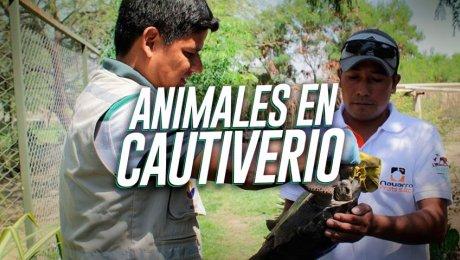 Los animales silvestres secuestrados tienen una segunda oportunidad en estos lugares