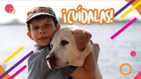 Mascotas en la casa: ¿Cómo enseñarle a los chicos a ser responsables?