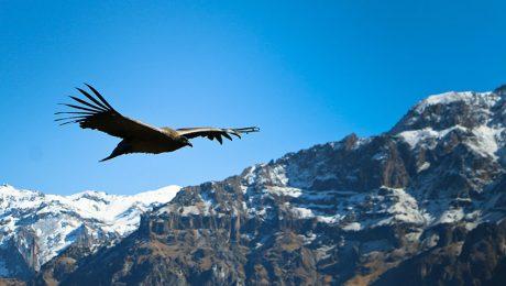 Volar sobre un cañon: El Valle del Colca