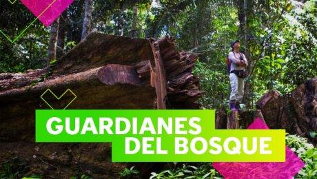 Tú puedes salvar los árboles de la selva peruana con Arbio