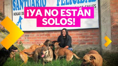 La estudiante de veterinaria que le devuelve la felicidad a los animales abandonados
