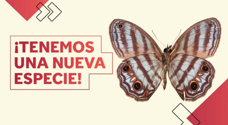 ¡Esta increíble mariposa acaba de ser descubierta en la Amazonía!