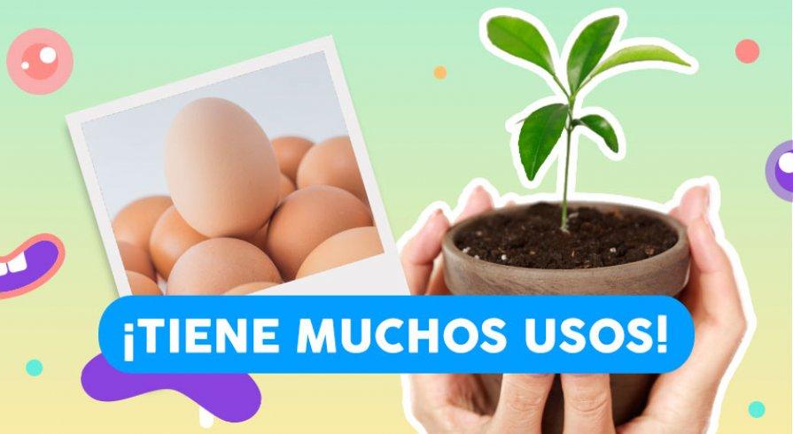 """Utiliza las cáscaras de huevo para """"alimentar"""" a tus plantas"""