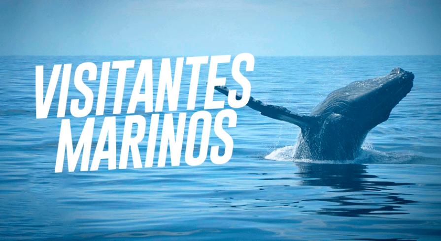 Día Mundial de los Océanos: Estas especies visitan nuestro mar cada año