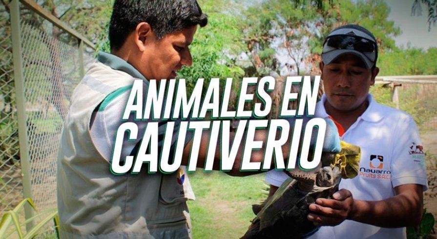 Estos lugares permiten que animales silvestres secuestrados tengan una segunda oportunidad