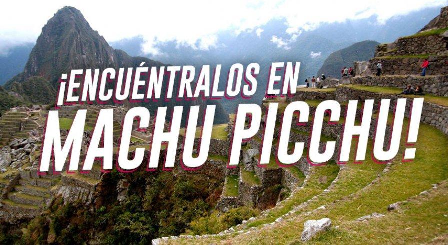 Estos son los animales que puedes ver en Machu Picchu