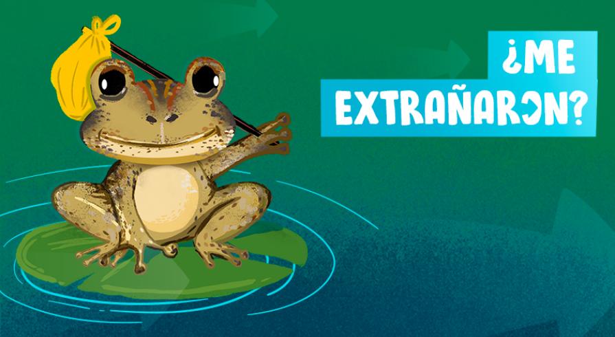 ¡Volvieron las ranas gigantes de Junín!