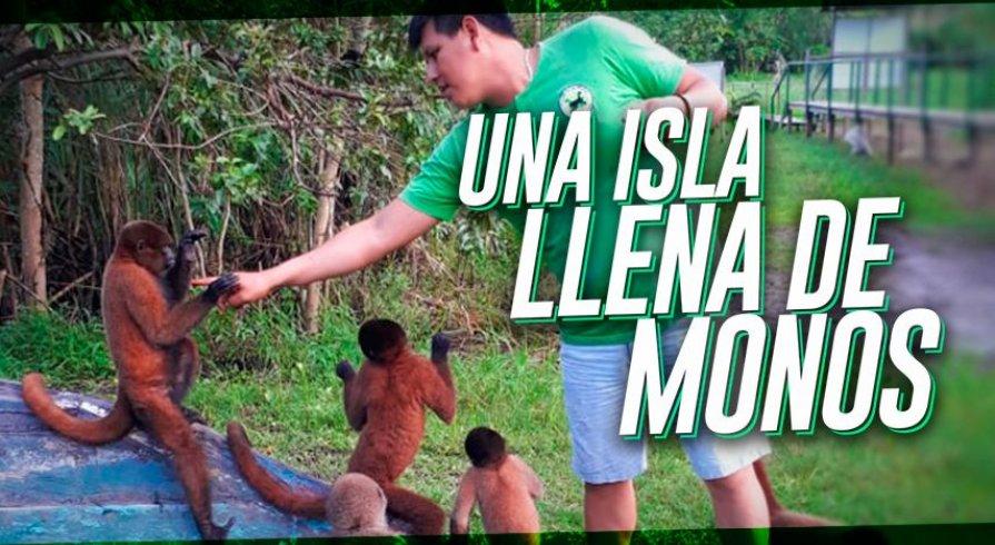 Una isla llena de monos