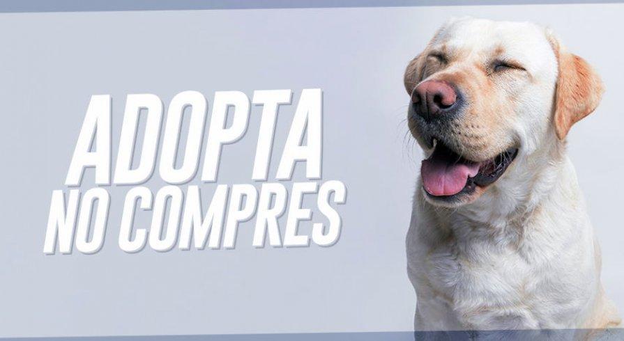 3 historias de adopción de mascotas que no podrás evitar compartir