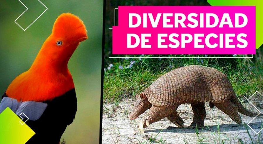 Cuatro animales exóticos que viven en el Perú y quizás no conocías